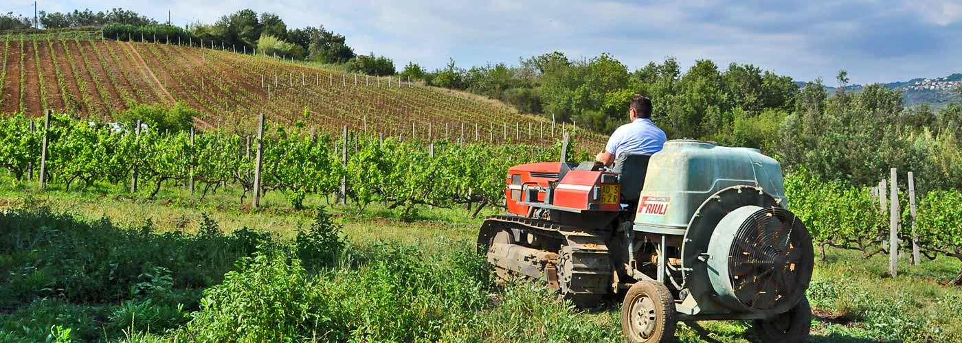 Microcredito per l'Azienda agricola e vinicola Mastropietro