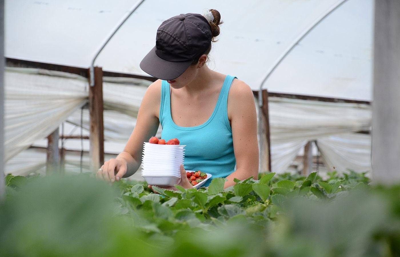 giovani imprese agricole